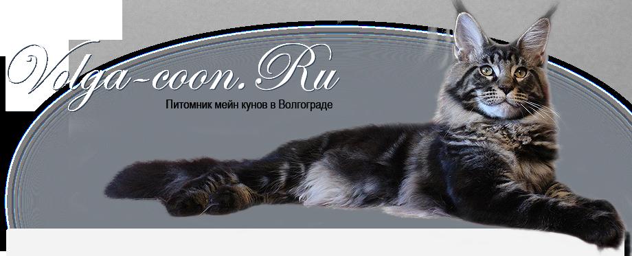 Шеридан кот